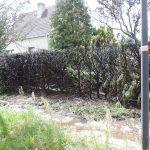 Mann in Haldensleben setzt beim Unkrautverbrennen Hecke in Brand